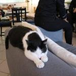 【スロバキア】ブラチスラバの猫カフェ「Mac kafe」/猫との幸せな時間